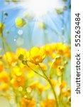 Buttercup. Yellow  Flower