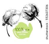 hand drawn set of cotton... | Shutterstock . vector #552637306