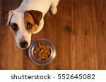 Pet Eating Food. Dog Eats Food...