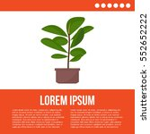green indoor leafy flat style... | Shutterstock .eps vector #552652222