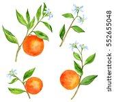 set of orange tree branches...   Shutterstock . vector #552655048