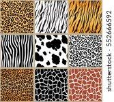 animal skin seamless pattern... | Shutterstock .eps vector #552666592