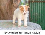 beautiful cute thai bang kaew... | Shutterstock . vector #552672325