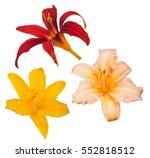 set of lily blooms isolated on...   Shutterstock . vector #552818512