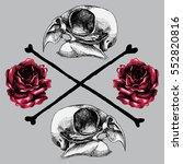 bird's skull and red roses ... | Shutterstock .eps vector #552820816