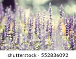 natural flower background ... | Shutterstock . vector #552836092