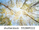 Upward Perspective View Of Tal...