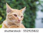 Orange Cat  Look Some Thing....