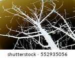 abstraction  white tree... | Shutterstock . vector #552935056
