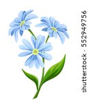 three blue flowers isolated on... | Shutterstock .eps vector #552949756