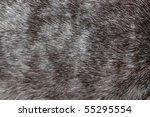 Background  The Rabbit Skin ...