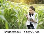 biotechnology woman engineer... | Shutterstock . vector #552990736