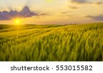 sunset over a field of young... | Shutterstock . vector #553015582