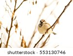 Beautiful Sparrow On A Branch...