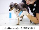 female veterinarian doctor... | Shutterstock . vector #553158475