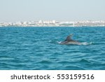 dolphins of the estuary of the... | Shutterstock . vector #553159516