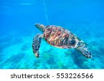Sea Turtle In Turquoise Blue...