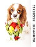 easter dog. easter eggs in... | Shutterstock . vector #553288612