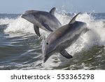 bottlenose dolphin    tursiops... | Shutterstock . vector #553365298