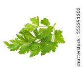 fresh leaf parsley | Shutterstock . vector #553391302