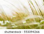 Grass With White Flower In...