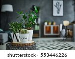 Decorative Green Houseplant In...