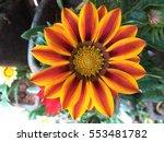 Dalia Flower