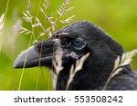Detail Portrait Of Raven Hidde...