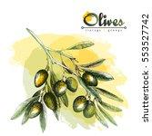 big olive branch sketch vector... | Shutterstock .eps vector #553527742