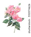 watercolor roses   isolated on... | Shutterstock . vector #553574626