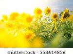 Sunflower Circle Big Yellow...