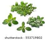 set of fresh marjoram  origanum ... | Shutterstock . vector #553719802