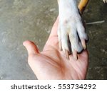 touching between hand and dog... | Shutterstock . vector #553734292