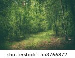 dark moody forest with path and ... | Shutterstock . vector #553766872