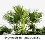 exotic  palm tree's  shape on... | Shutterstock . vector #553808158