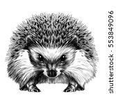 hedgehog sketch vector | Shutterstock .eps vector #553849096