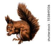Squirrel Gnaws Nut Profile...