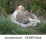 Lujan  Argentina   Duck Nest I...