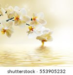 Beautiful White Orchid Flower...