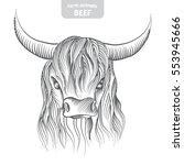 head pattern highland cattle...