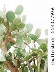cactus landscape. mexico.... | Shutterstock . vector #554077966