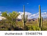 Sonoran Desert With Saguaros...