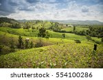 amazing wild nature view of... | Shutterstock . vector #554100286