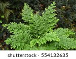details of the nature for... | Shutterstock . vector #554132635