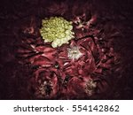 flower background and texture  | Shutterstock . vector #554142862