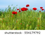 Wild Poppies In A Field