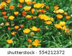 Bright Summer Background With...