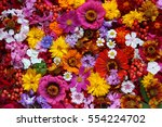 colorful background from garden ... | Shutterstock . vector #554224702