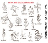 best herbal remedies for... | Shutterstock .eps vector #554304496