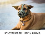 Brown Dog Muzzle Dog Sitting...